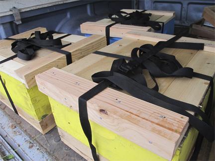 Bee hive splits loaded in truck