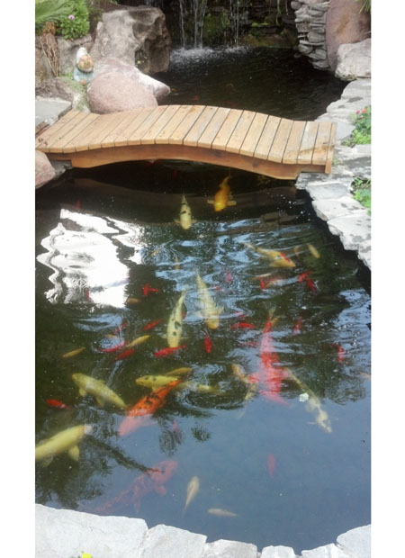Koi Pond With Bridge Pacific Ponds And Design
