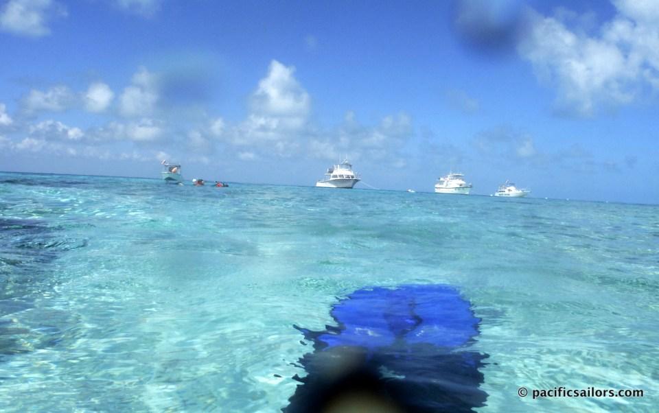 Snorkel Florida Keys Pennekamp State Park