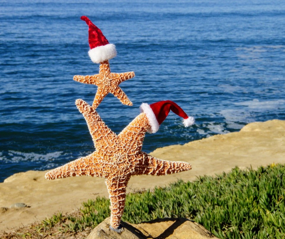 Seastar christmas holiday hat on ocean