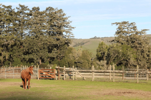 A Morgan horse enjoys the sun right before feeding time at the Morgan Horse Ranch. Photo by Molly Oleson.