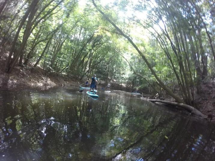 Rainforest Experience Kuranda