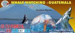 Whale Watching marketing for the Pacific coast of Guatemala.