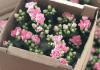 FloralBox, Flower box idea, flower box design, Floral Box,