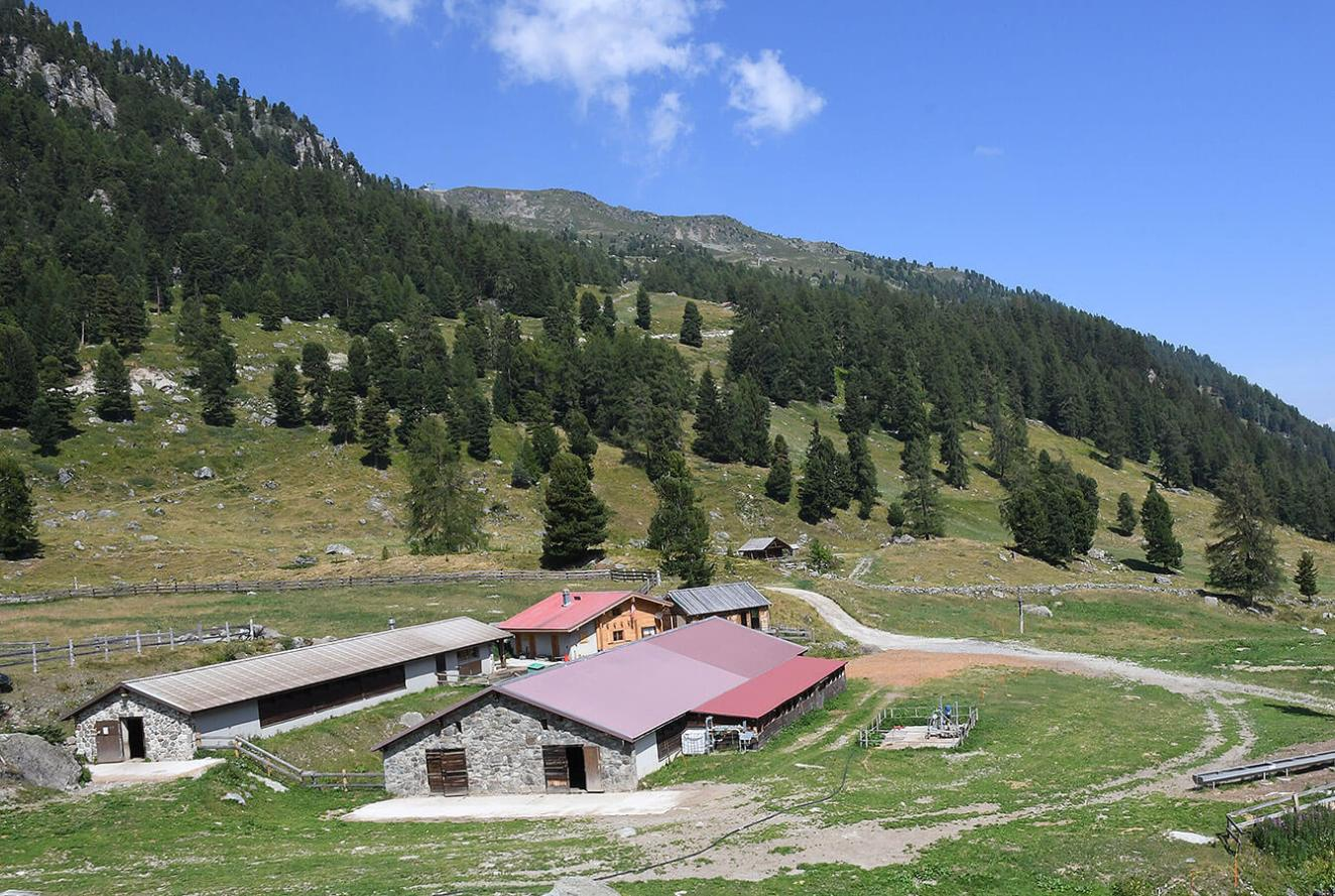 Mountain caban and Alpine Cheese making facility
