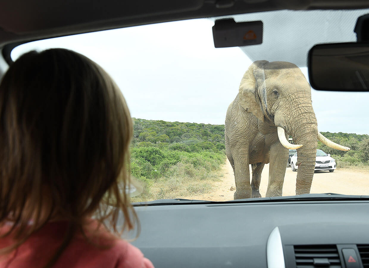 Self-drive in the Addo Elephant park