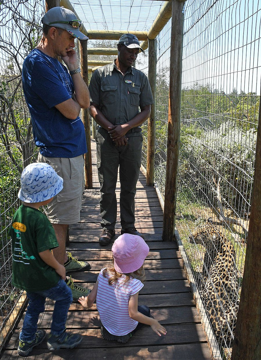 Observing the Leopard at Tenikwa