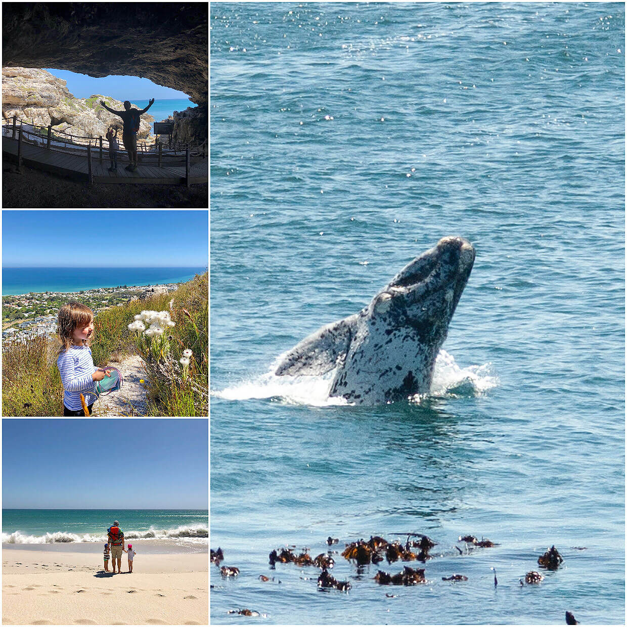 around Hermanus / Gansbaai area with kids