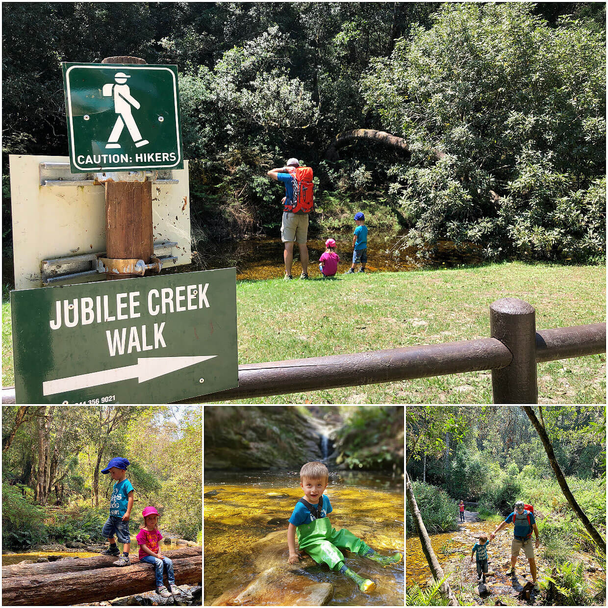 Jubilee Creek Walk in Knysna Forest