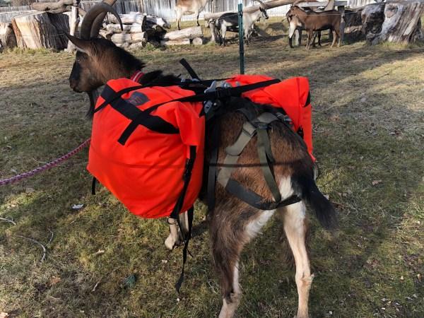 Best Pack Goat Panniers