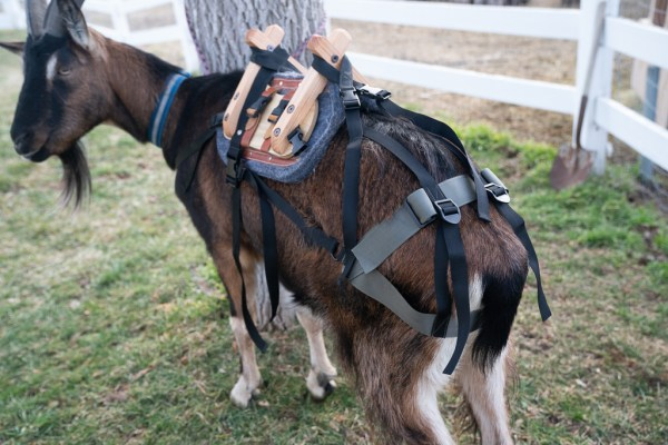 pack goat saddles