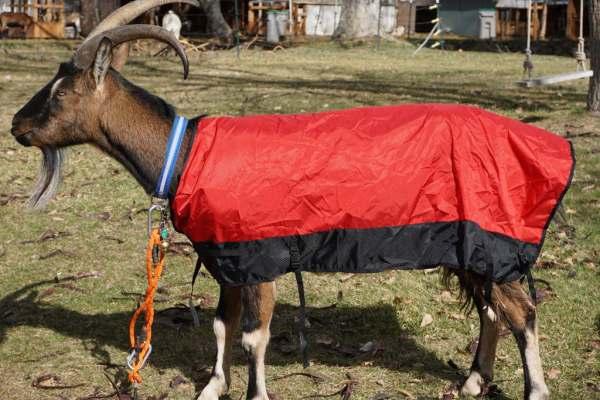 Goat coat