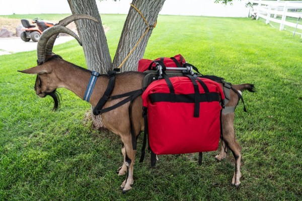 small pack goat pannier