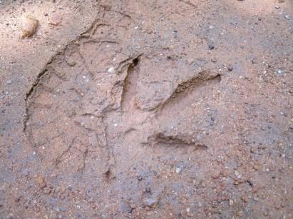 Turkey print on trail