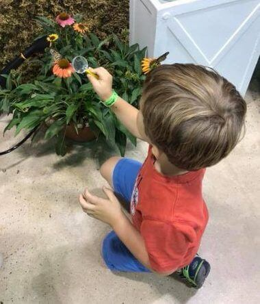 Little boy using a magnifying glass to look at butterflies.