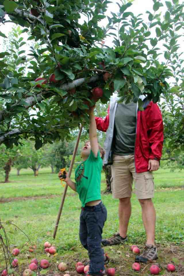 Stribling Orchard Apple Picking