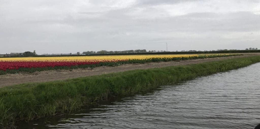 Keukenhof Holland Tulip Fields
