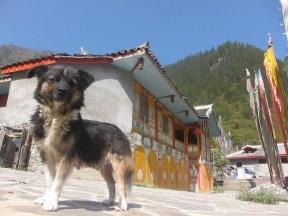 ALMOND DOG!
