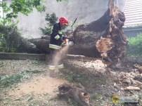 8 czerwca | Drzewo runęło na zakon | Strażacy usuwają potężne drzewo, które runęło w parku, uszkadzając ogrodzenie Domu Zakonnego zgromadzenia sióstr Świętego Józefa przy ul. Wojska Polskiego. | Foto: KP PSP Nysa | http://paczkow24.pl/fotopaczkow-drzewo-runelo-na-ogrodzenie-zakonu/