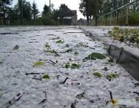 15 sierpnia | Grad wielkości piłek ping-pongowych | Nad Paczkowem przeszła burza z gradem wielkości piłek ping-pongowych. Nie obyło się bez strat. | Foto: E. Sieprawska-Korzon | http://paczkow24.pl/grad-wielkosci-pilek-ping-pongowych-sa-straty/