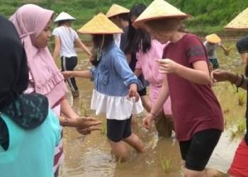 Pelajar pertukaran Indonesia-Jerman belajar bercocok tanam di Nagari Matur. (foto: amc)