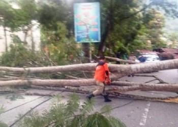 Pohon tumbang di Kota Sawahlunto. (tumpak)