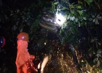 Pohon tumbang di Kelok 44, Kamis (11/10) malam. (ist)
