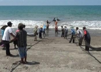 Tradisi maelo pukek nelayan Agam. (foto: amc)