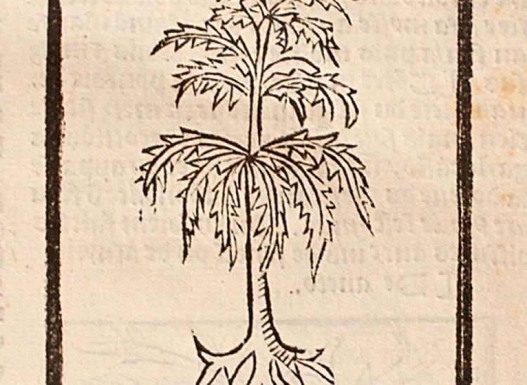 Woodcut print of a plant illustration