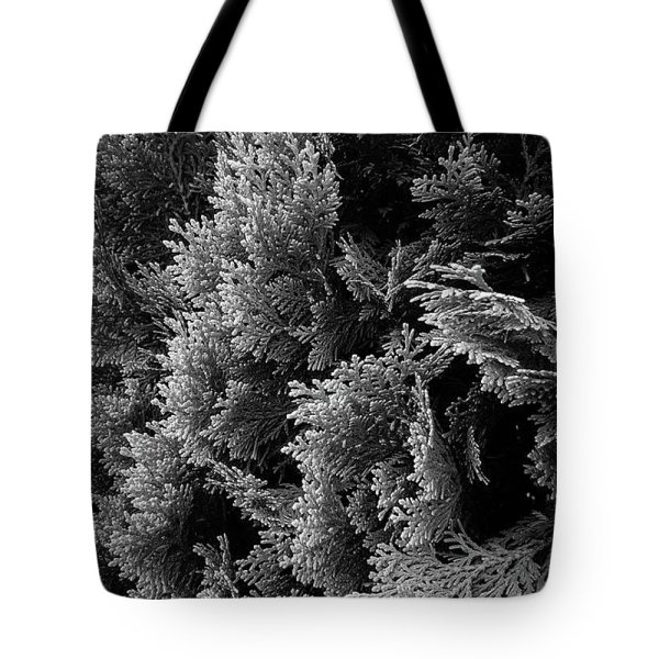 cypress branches black and white photograph tote