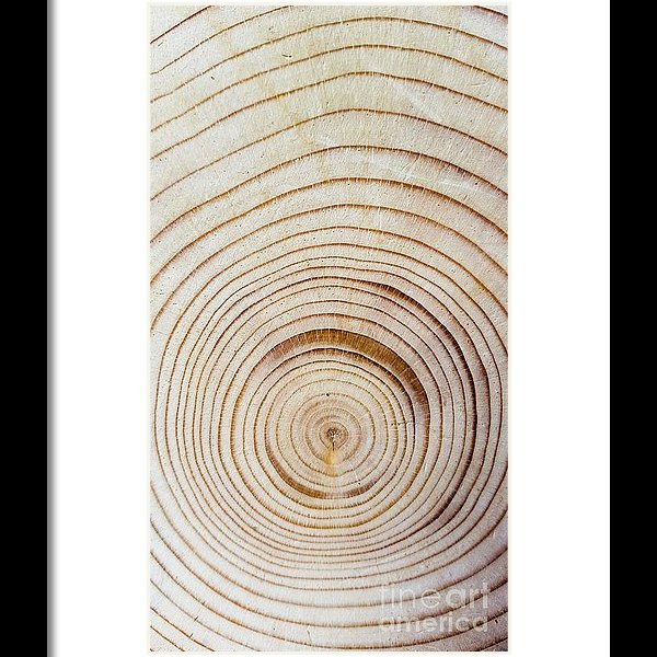 Concentric tree rings framed print