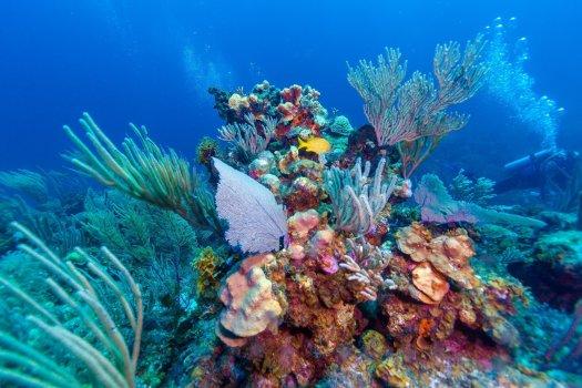 coral-reef-cuba