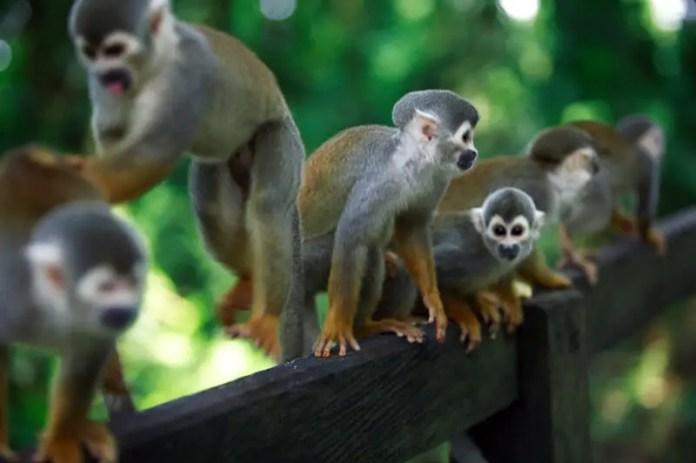 isla micos tarifa
