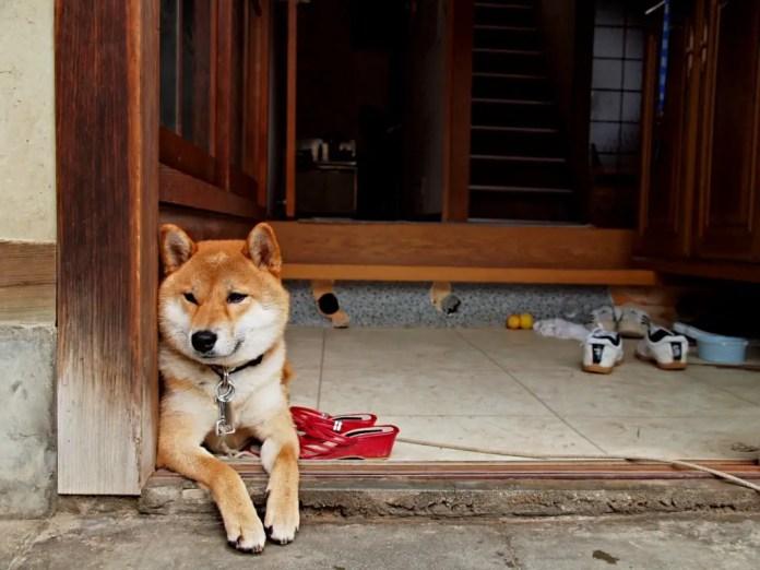 emigrar-con-mascotas-japon