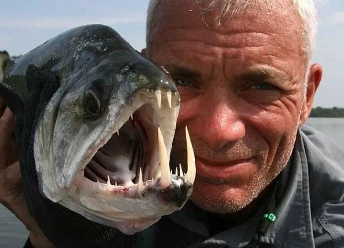 Si te atreves a pescar una piraña puedes comértela al instante