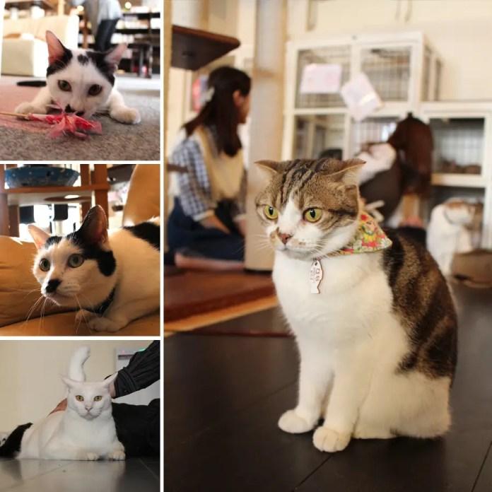 gatos fotos tiernas