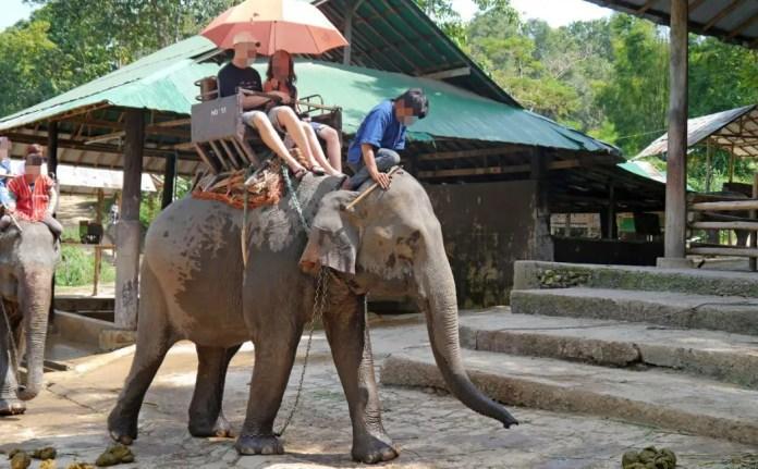 turismo y animales