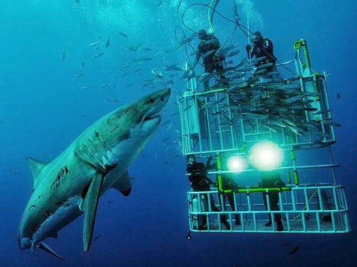 donde ver tiburones estando en una jaula