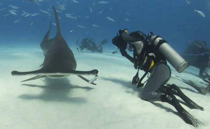 frecuencia de ataques de tiburones en mexico