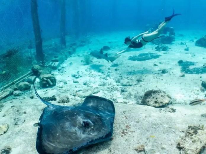 Lugares turísitcos en Cozumel: Stingray Beach