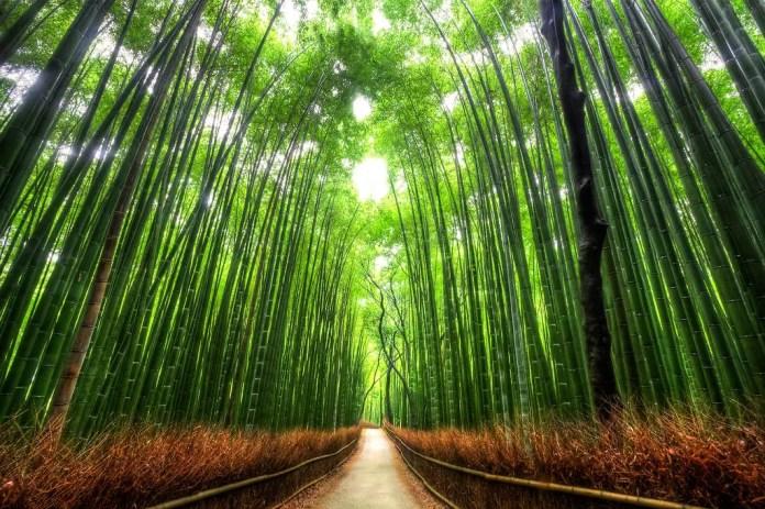 lugares turisticos de japon