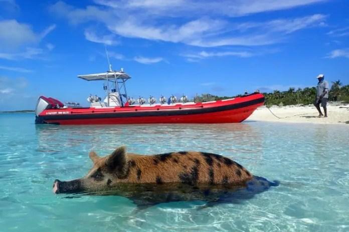 Conoce Bahamas