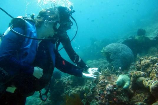 Arrecifes de Tubbataha