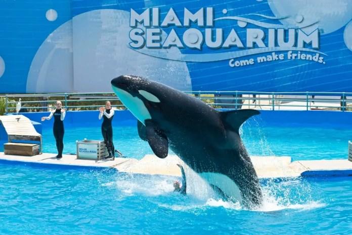 Qué ver en Miami: Miami Seaquarium