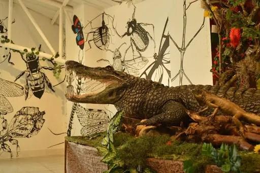Museo de Historia Natural de Bogotá
