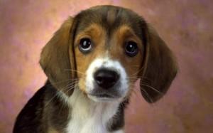 cute-dog-widescreen-wallpape_w520