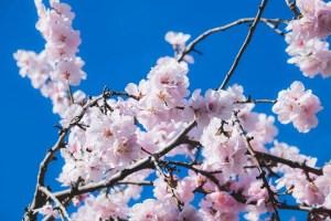Bien vivre la Semaine Sainte – Triduum des rameaux (Jour 2)