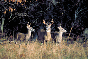 Pennsylvania firearms deer season: 'There's no doubt something special is happening'