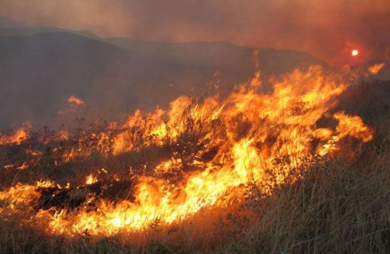 Κατασβήστηκε η πυρκαγιά που ξέσπασε στην περιοχή της Σαλαμιού