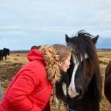 iceland-horses-2